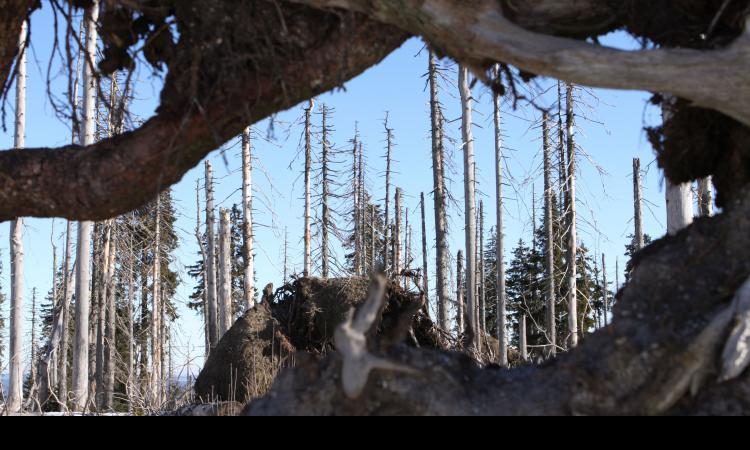 Obrázek kčlánku Kraj zvažuje, jak pomoci vlastníkům kůrovcem napadených lesů